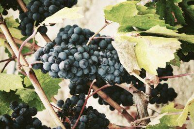 ruta del vino donde alojarse en mendoza