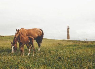 cuenta bancaria en uruguay cuenta en dolares dolar en uruguay cabo polonio caballos